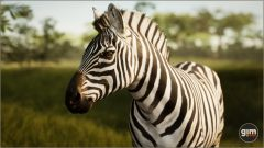 Zebra_Games_in_Motion_Realistic_Animated_3D_Model-1