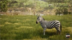 Zebra_Games_in_Motion_Realistic_Animated_3D_Model-2