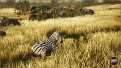 Zebra_Games_in_Motion_Realistic_Animated_3D_Model-3