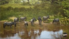 Zebra_Games_in_Motion_Realistic_Animated_3D_Model-5